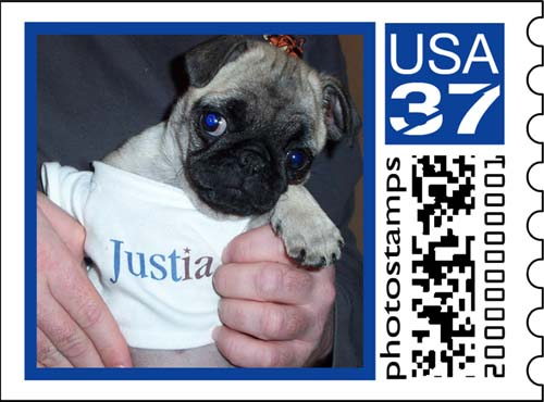 Sheba wearing a Justia Shirt Stamp
